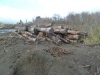 Logs removed from the silt