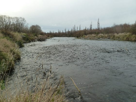 Looking downstream from where The Hirangi Stream meets the Tongariro river
