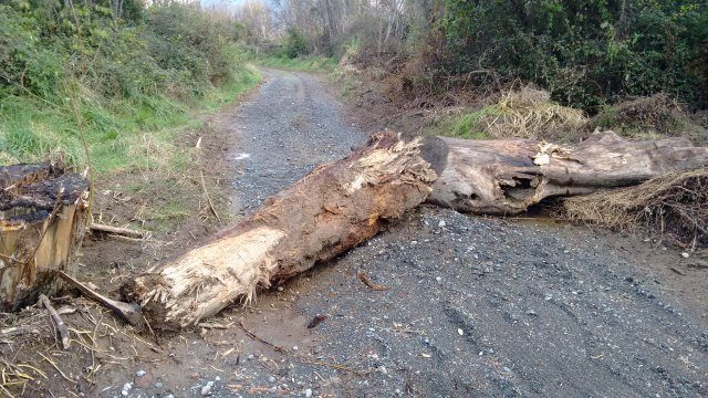 New road cross Maori land