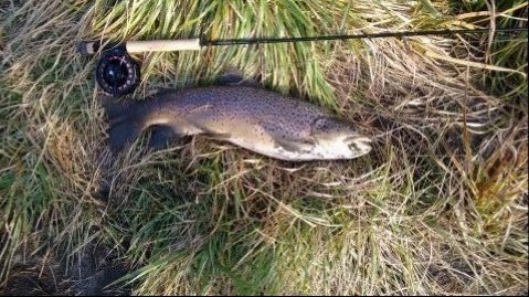 7.5 lb Brown. A genuine weight weighed in