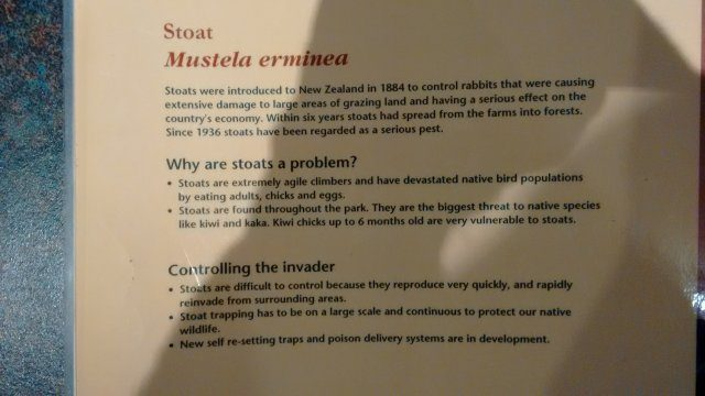 Stoat information at Whakapapa DOC visitor centreIMG_20160713_134224418