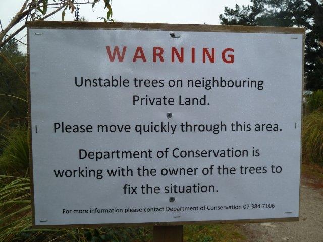 163-jpg  Signage of dangerous pine tree