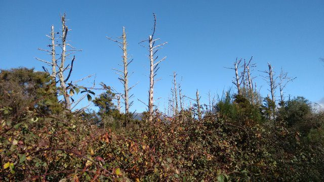 Decaying Pines