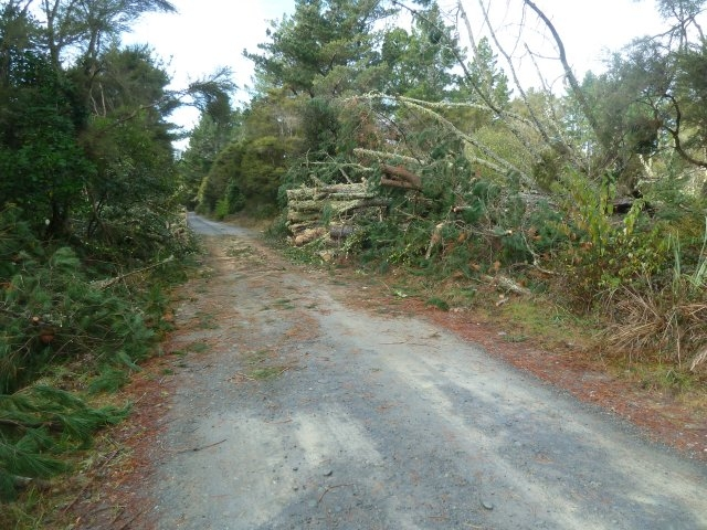 Access to the Blue Pool blocked by wind felled Pine