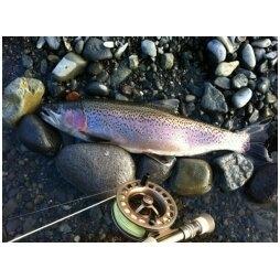 4lb trout