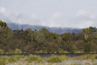 tongariro-river-1-after-pine-control_0