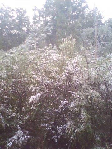 pic_0725_047-snowfall-26711