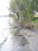 10. Te R beach destruction of native trees 27 Oct 2007