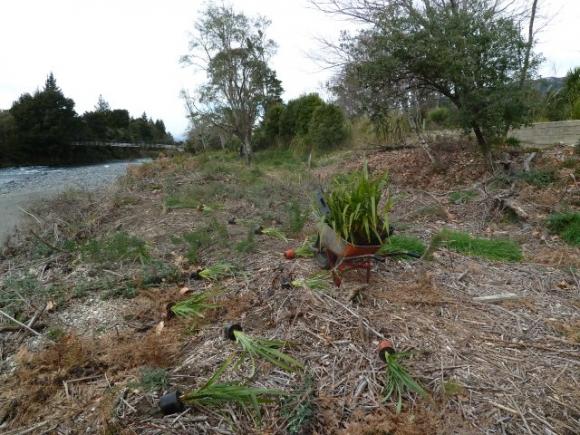 Planting area, left bank Breakfast Pool