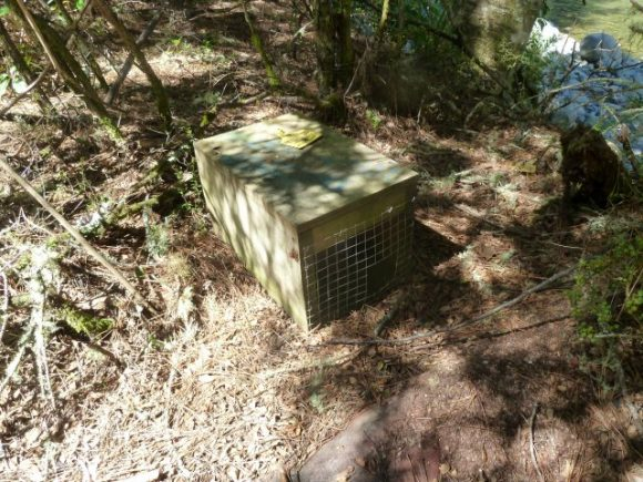 047 Rat and Stoat Traps