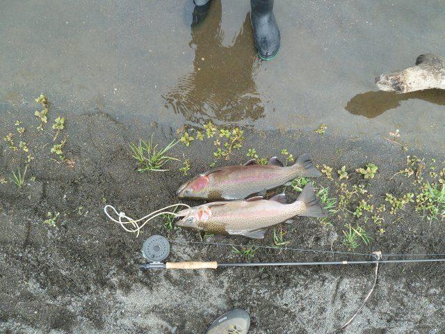 Good sized fish