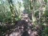 Tongariro River Trail in DoC track