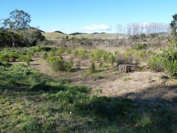 Taupahi Reserve
