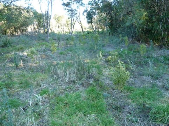 Te Aho to Taupahi Reserve.