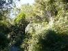 24-3-09-native-river-side-vegetation
